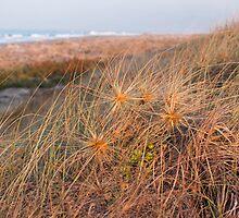 sand dunes 2 by Anne Scantlebury