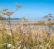 grasses by the sea by Anne Scantlebury