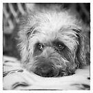 Cute Scruffy Pup in Black and White by Natalie Kinnear
