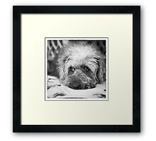 Cute Scruffy Pup in Black and White Framed Print