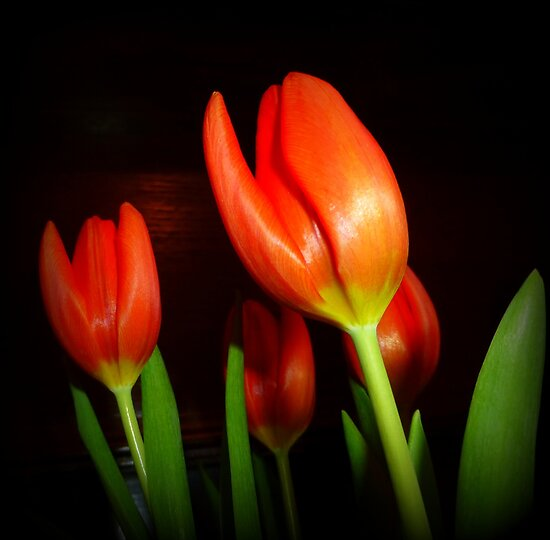Tulips For Paul by Fara