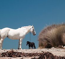 two horses by Anne Scantlebury