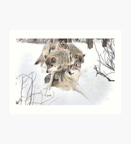 Wolves at play Art Print