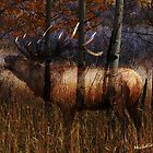 Regal Elk by WishesandWhims