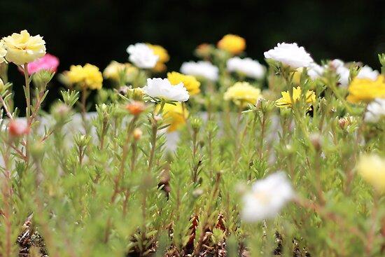 flowers by arlingtonpup