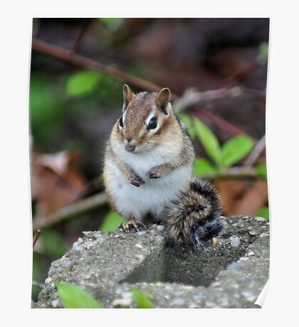 Cute Chipmunk Poster