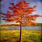 Autumn Tree by Carlos Restrepo