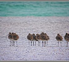 Little Birds in a Row by Mikell Herrick