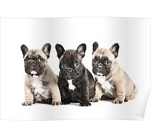 Puppy Pals  Poster