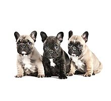 Puppy Pals  Photographic Print