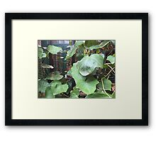 NYC, Vines in the Village Framed Print