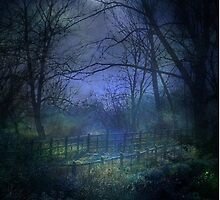Moonlit Walk by Kim Slater