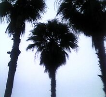 Florida Palm Trees by AstroNance