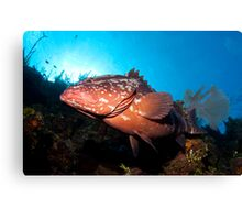 Along the Wall With Mr. Grouper Canvas Print