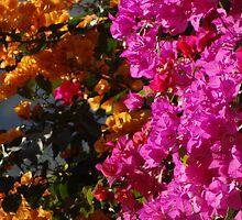Colorful Tropics - Zona Tropial Colorada by Bernhard Matejka