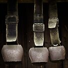 Rusty Cow Bells by vivendulies
