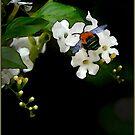blue bee painting by carol brandt