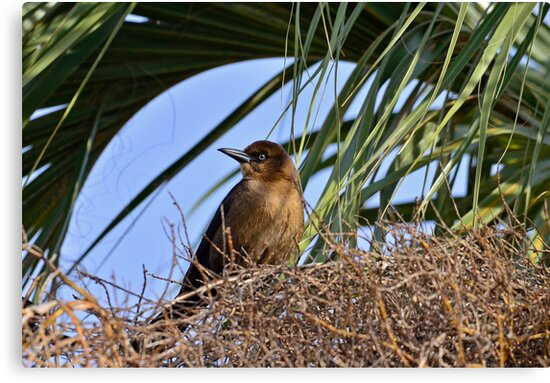 Crackle Nestled in a Palm Tree by TJ Baccari Photography