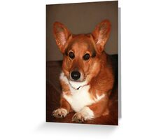 Sharky's 8 Year Portrait ~ Greeting Card