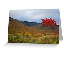 An Autumn Sycamore, Scotland.  Greeting Card