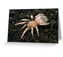Mexican Red Knee Spiderling Greeting Card