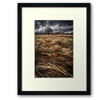 Bluster Framed Print