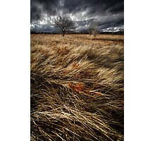 Bluster Photographic Print