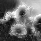 Daisy Flowers In Black And White by SmilinEyes