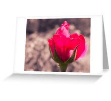 Just Blooming Rose Greeting Card