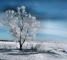 Frosty Tree by Kim Taylor