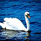 White Swan  by vivendulies