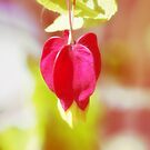 Red Balloon Blossom by vivendulies