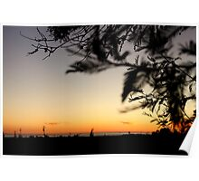 Silhouetted Leaves Poster
