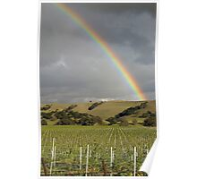Vineyard Rainbow Poster