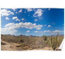 desert at baja california Poster