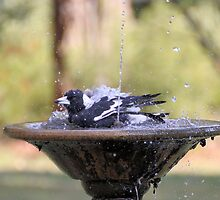 Magpie Cooling in a Church Fountain by Kym Bradley
