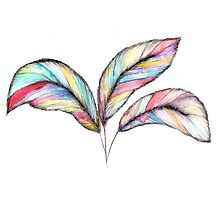 Rainbow Feathers Photographic Print