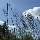 Grass and Sky-Dordogne-09 by Pat - Pat Bullen-Whatling Gallery