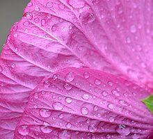 Kissing Pink by MichelleAyn