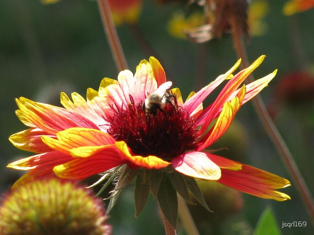 Flower Bee by jsqrl169