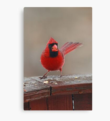"""""""I'm Wet And I'm Mad """" Canvas Print"""