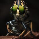 'The Robberfly' by Kerrod Sulter