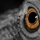 The Eye Of The Dragon by Kerrod Sulter