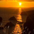 beautiful sunset over the coastal rocks with wild highl grass by morrbyte