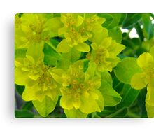 Yellow levity Canvas Print