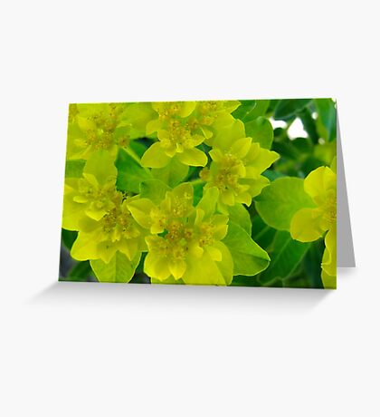 Yellow levity Greeting Card