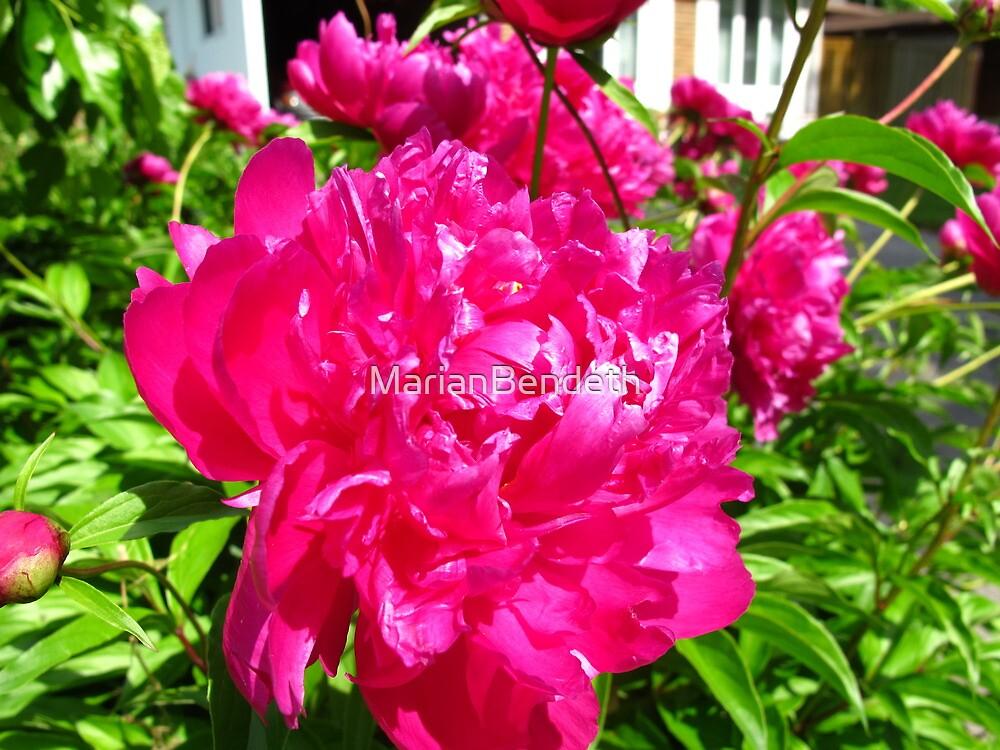 Bleeding pink by MarianBendeth