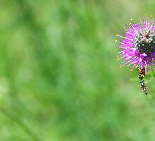 Busy Insects by lindsycarranza