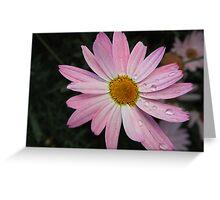 Blushing Daisy Greeting Card