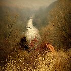 Patapsco Valley by Robin Lee